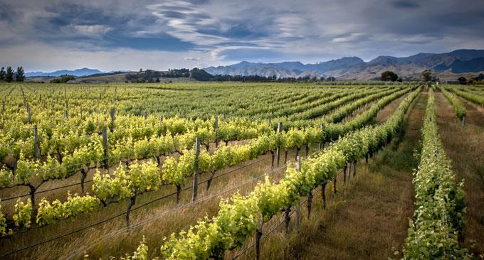 Cool Climate Weine bei vinovossum
