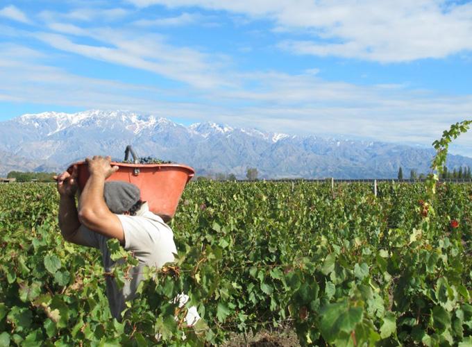 Weinbau in Südamerika