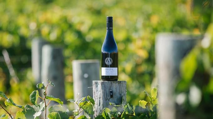 Pinot Noir aus Neuseeland