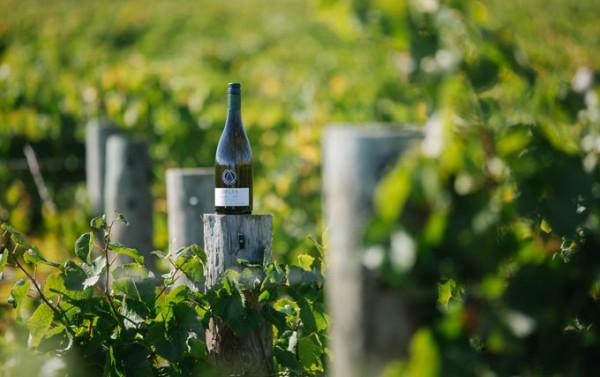 Hatters-Hill-Sauvignon-Blanc-bei-vinovossum