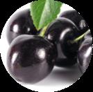 schwarze Kirsche